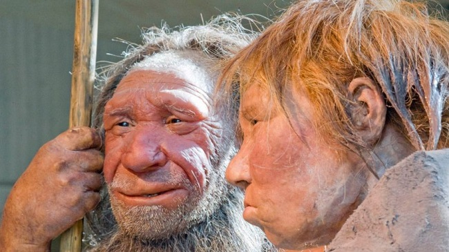 difference between Neanderthal and Denisovan