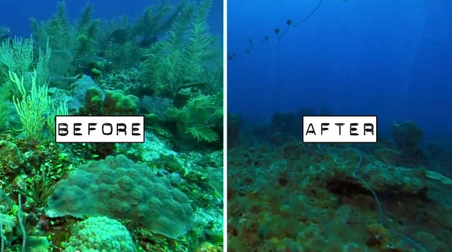 Ocean acidification and coral bleaching