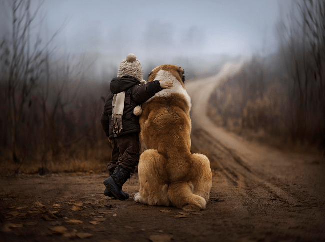 Dogs are man's best friend