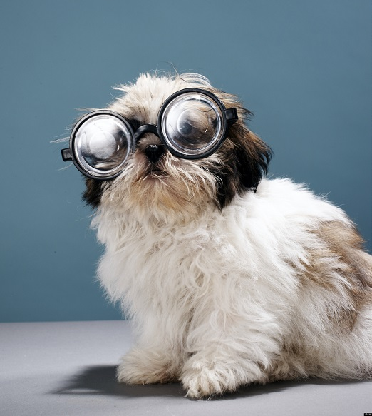 Sunglasses for your dog