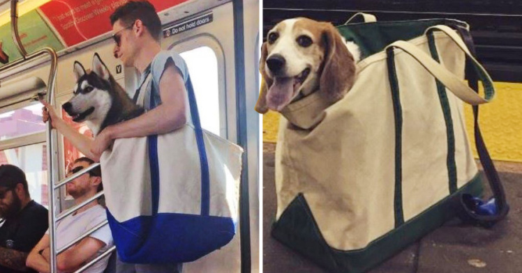 dogs are not allowed on a NYC subway
