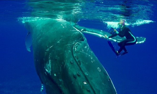 She was busy studying the whale