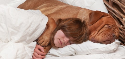 The Way Your Dog Sleeps With You Can Say A Lot About The Kind Of Relationship You Share