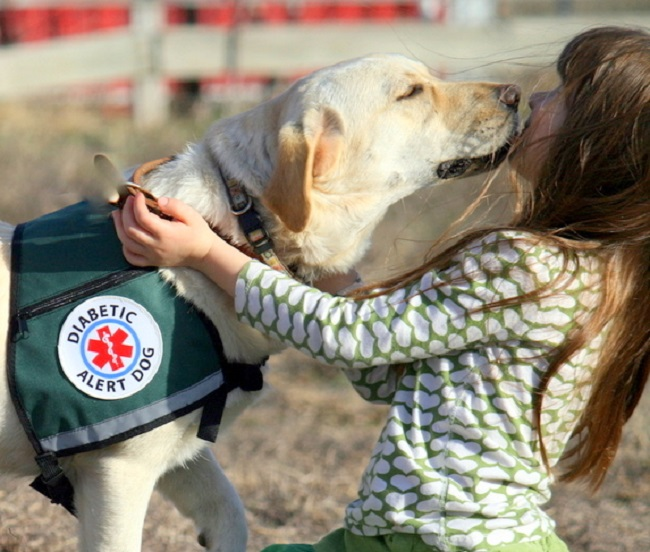 Diabetic assistance dogs