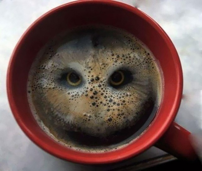 An owl in coffee cup