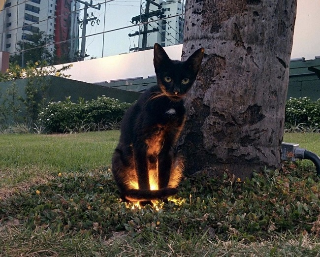 The lightning cat