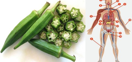 Did You Know Okra Prevents Hunger, Fights Diabetes, Lowers Cholesterol and Removes Stress and Fatigue.