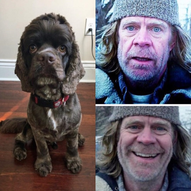 This dog looks like William H. Macy