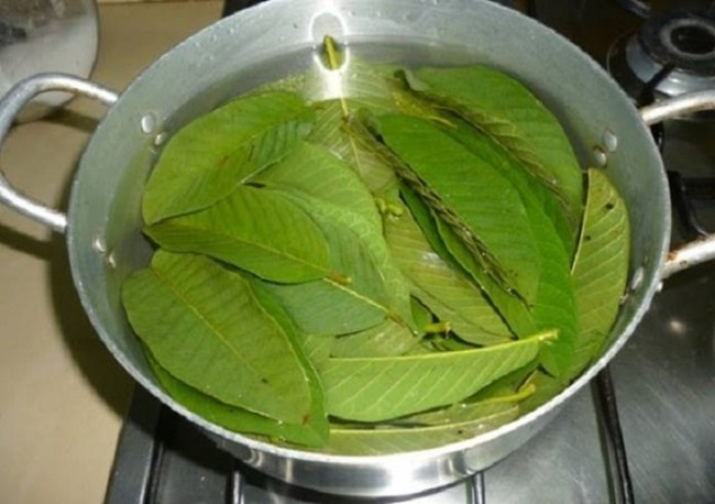 Guava-leaves in water