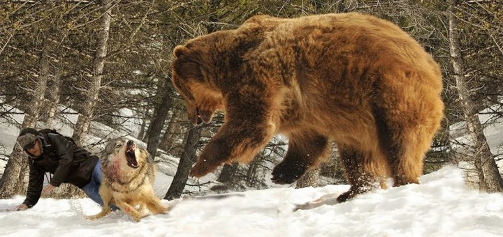 9 Times Wild Animals Saved Lives Of Humans