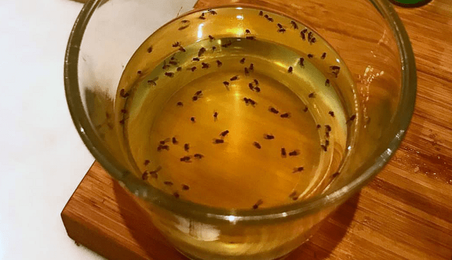 Make a DIY fruit fly trap