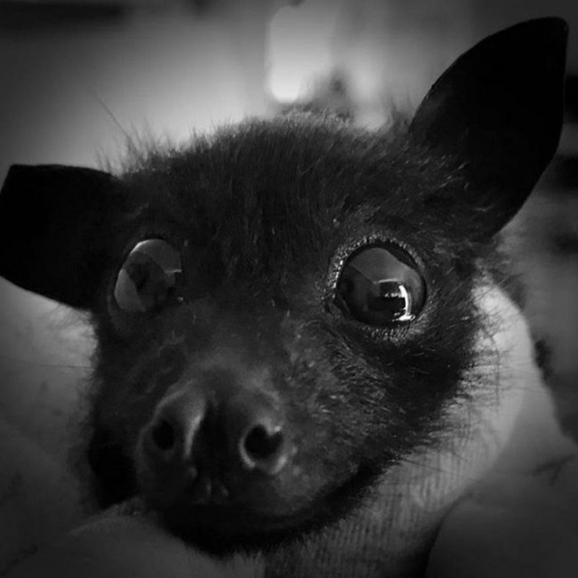 Bats are threatened by humans