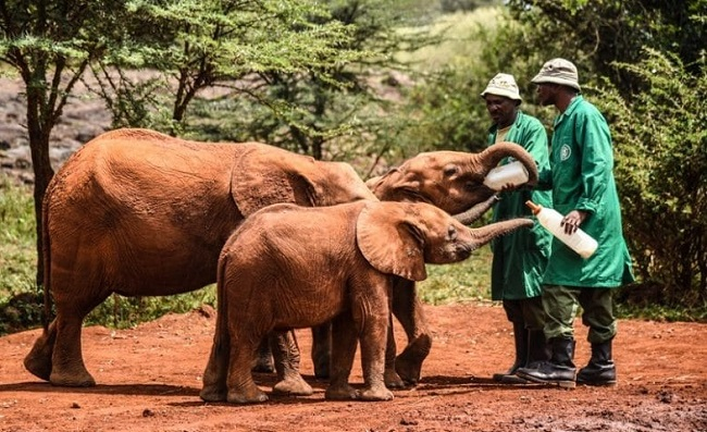 Helping elephants to drink water