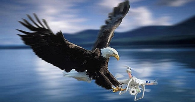 Authorities Want to Cite Bald Eagle That Attacked $995 Government Drone Sending It to Bottom of Lake Michigan