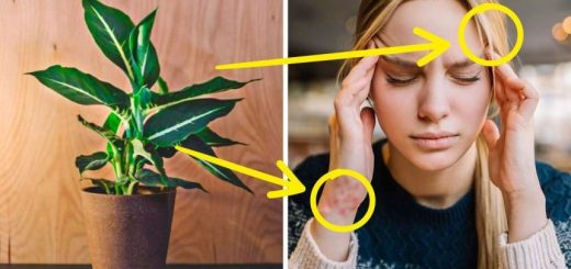 10 Types of Houseplants That Can be Dangerous for Your Health