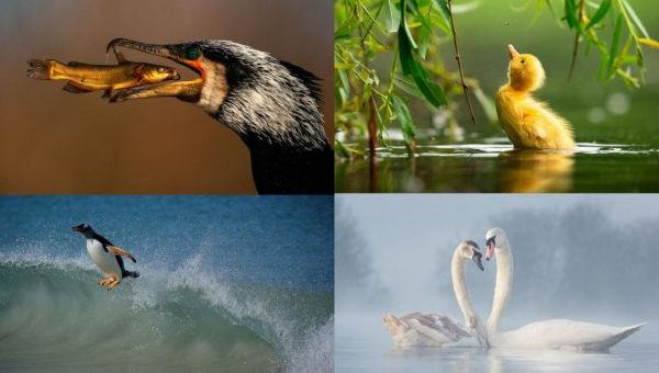 15 Pictures of Finalists of the 2021 Bird Photographer of The Year Awards