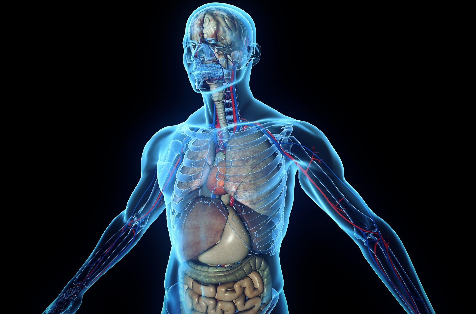 A Brand New Organ Has Just Been Discovered Within The Human Body