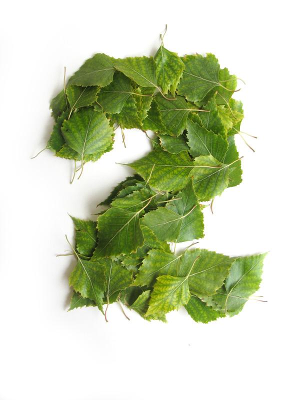 leaves-vladimir koncar