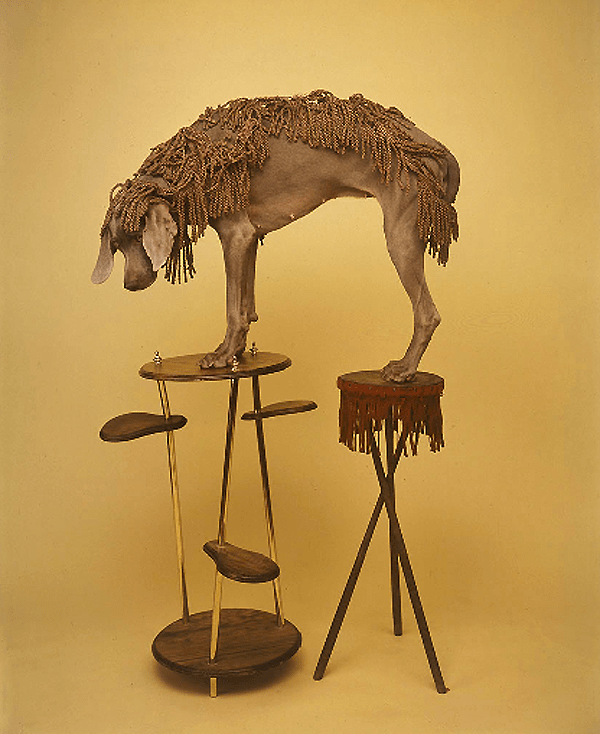 William Wegman : Fashion Photographs: Ingrid Sisch, William 74