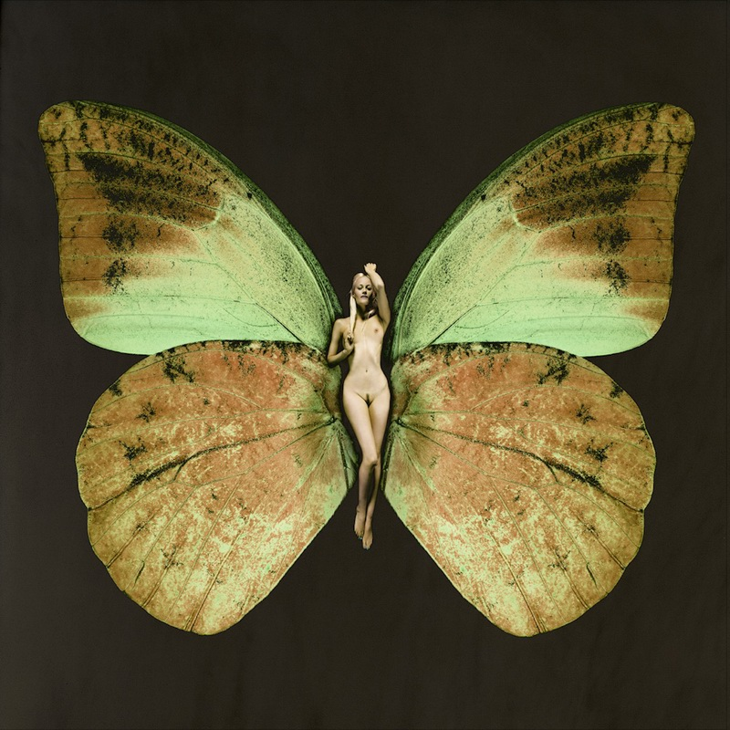 carsten wittes psyche butterfly series