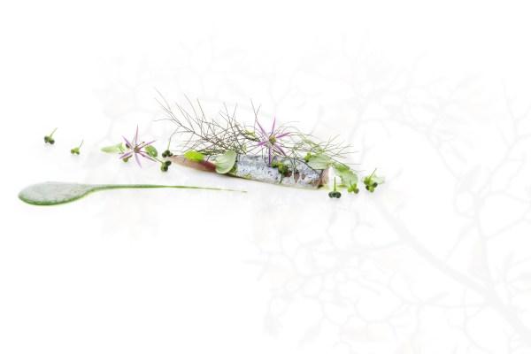 Mielcke Hurtigkarl's Metamorphosis Cookbook5