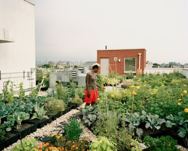 urban-farming-nyc-photo-by-Rob-Stephenson-12