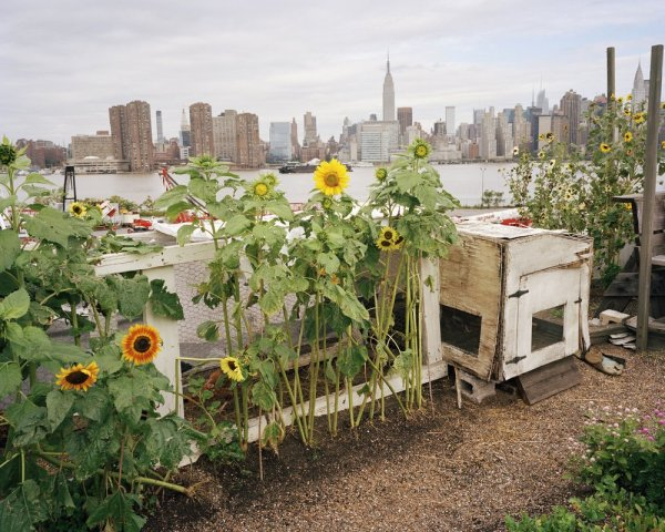 urban-farming-nyc-photo-by-Rob-Stephenson-3