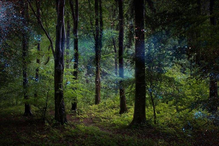 ellie-davies-art-forest-8