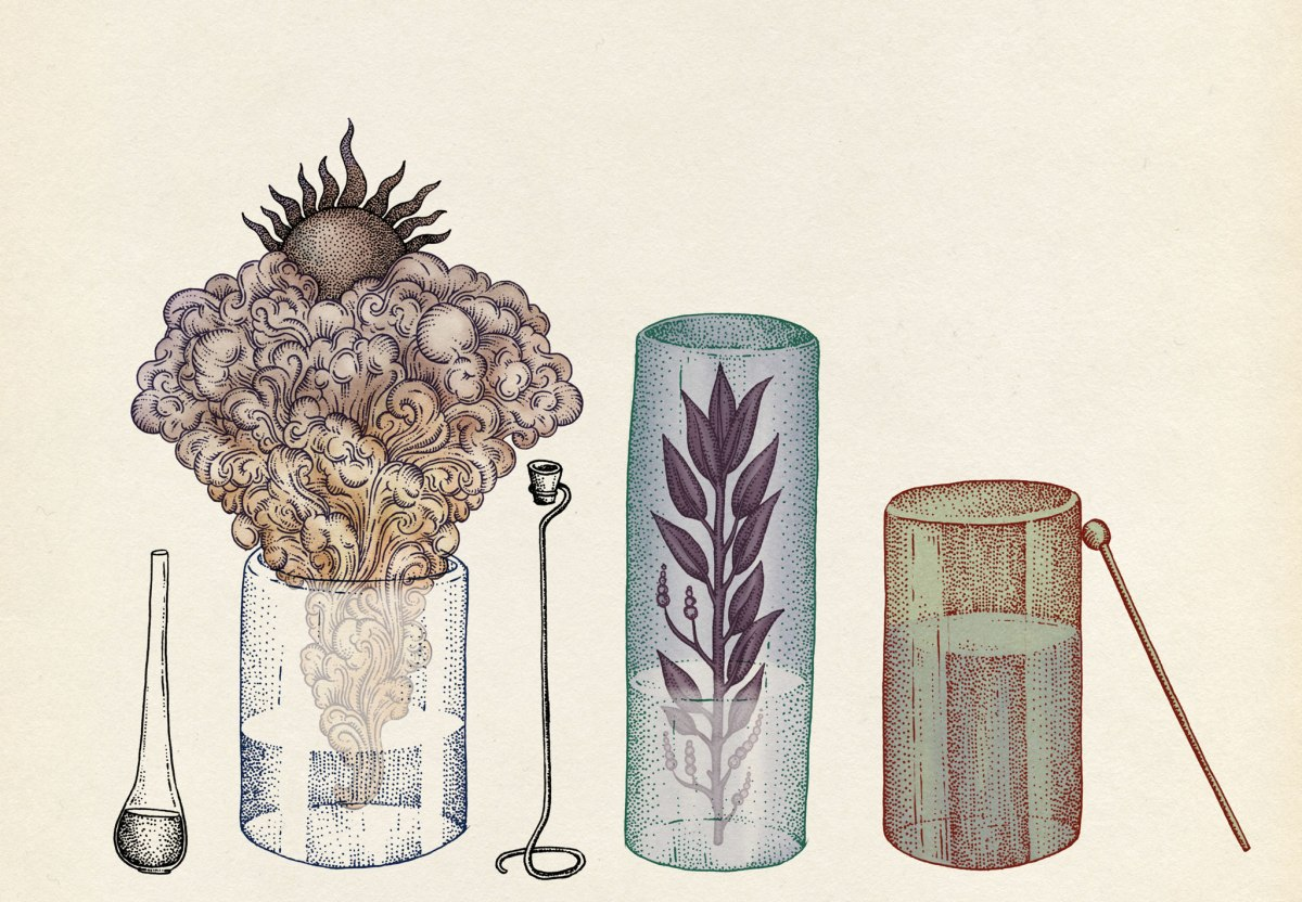 the-botanical-drawings-of-katie-scott-5