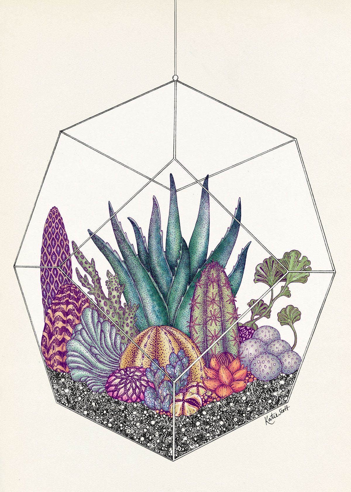 the-botanical-drawings-of-katie-scott-8