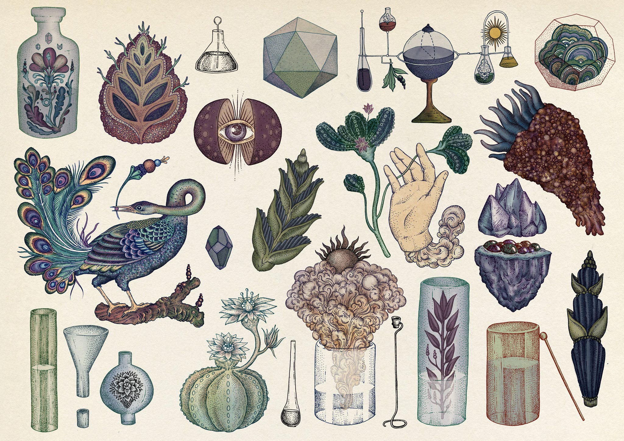 The Botanical Drawings Of Katie Scott 9 Trendland