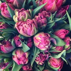 Duble early tulips