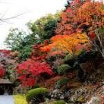 白龍園 1日100人限定の日本庭園