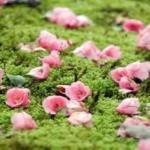 椿咲く春の特別公開 霊鑑寺