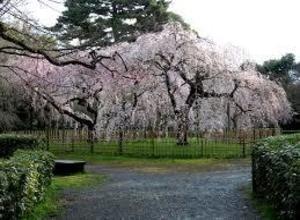 京都御苑完成