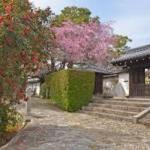 春の庭園特別公開 正伝永源院