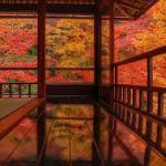 京都の紅葉狩り  床紅葉と紅葉のトンネル