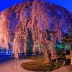 高台寺 春の特別展/ライトアップ