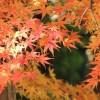 京都の紅葉狩りおすすめの名所と見頃