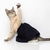 Because Your Cat Needs Designer Clothing, Too (And Maybe A Tipi)