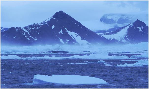 survive in Arctic Conditions