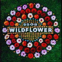 5 Seconds of Summer Wildflower Lyrics Mp3 Download