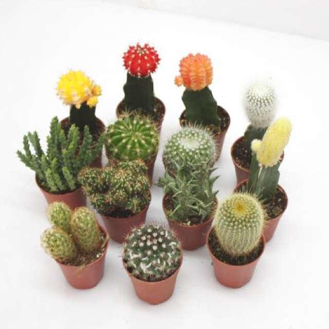 Mini Garden Decoration