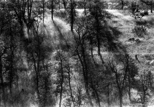 Trees and shadows.