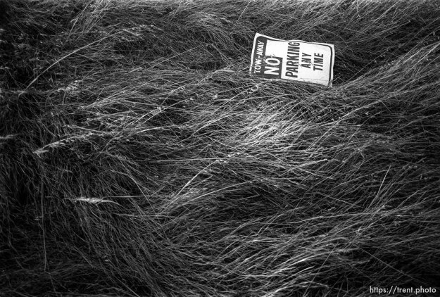 no parking sign in weeds.