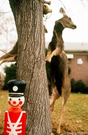 Smiling Christmas soldier in front of three dead deer, hanging from a tree.