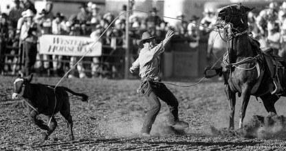 Calf roping at rodeo