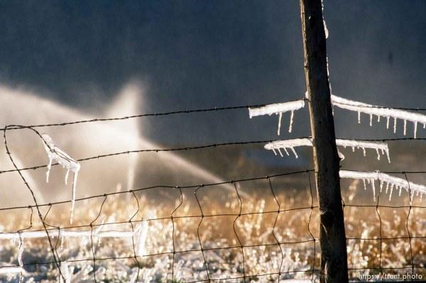 Sprinklers leave ice on a fence