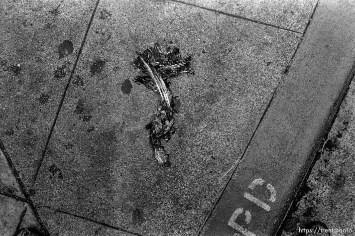 Dead bird on sidewalk
