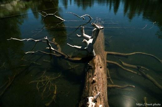 Tree in water at Sword Lake